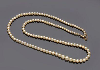 Collier de perles de culture en chute. Le...