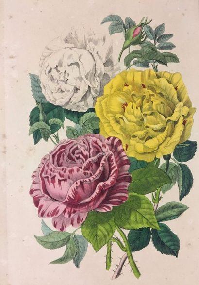 Alphonse KARR (1808 - 1890)  Voyage autour de mon Jardin  Illustrations par MM....