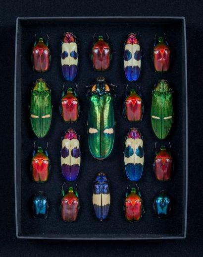 Composition JEFFCA de scarabées dans coffret