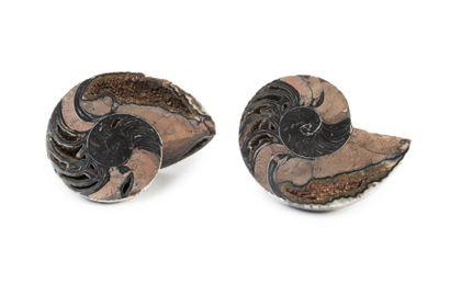 Nautiloide de belle taille, rare présence d'hématite, sutures intactes et graphisme d'une grande fin