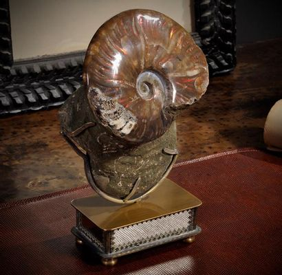 Double ammonite opale rouge