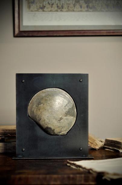 Bivalve fossile dans support plasma