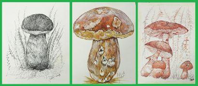 Antoinette JOBERT,  Lot de trois dessins...