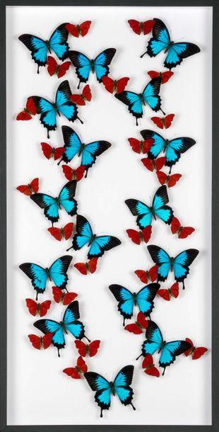 Très grande envolée de papillons en coffret...