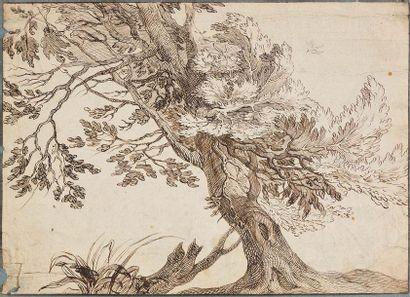 Ecole flamande du XVIIème siècle  Etude d'arbre...