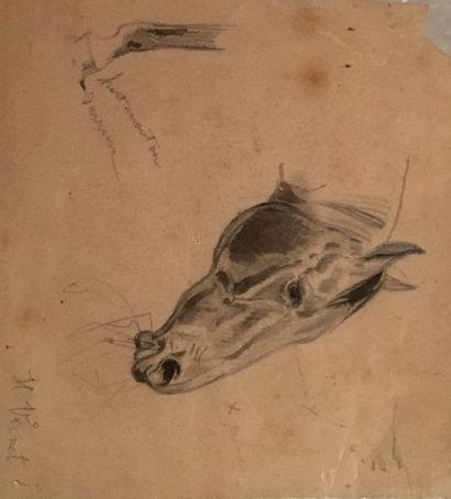 Etude de tête de cheval et d un pied  10...