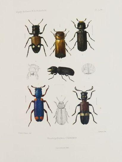 LESNE (P.). Coléoptères, Bostrychides, Clérides,...