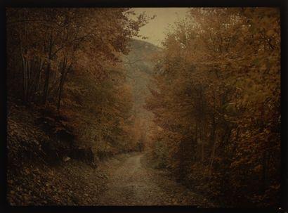 Autochrome Paysage d'automne, c. 1917 Plaque...