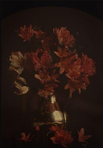 Autochrome Bouquet de fleurs rouges, c. 1907...