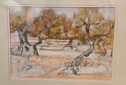 HULIN Jean (né en 1920)  Les oliviers  Encre...