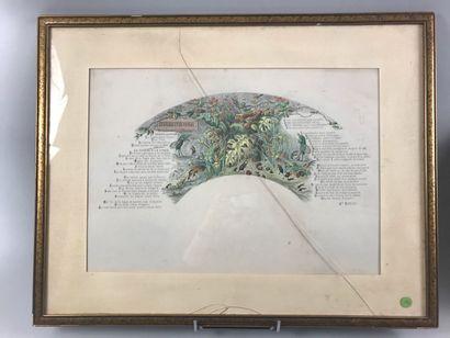 La cigale et la fourmi, 1867  Feuille d'éventail...