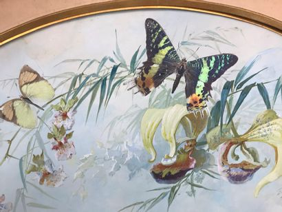 H. Poulin et F. Gardon, Papillons naturels par lépidochromie, vers 1890-1900  Exceptionnelle...