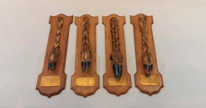 Trophées de chasses: 3 pieds de cerf et 1...