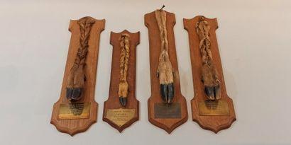 Trophées de chasses: 1 pied de chevreuil...