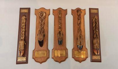 5 trophées de chasses dont 2 pieds de ce...