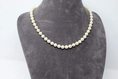 Collier de perles de culture choker, fermoir...