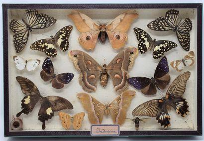 Une boite entomologique vitrée comprenant...