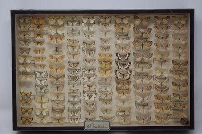 Deux boites entomologiques vitrées comprenant...