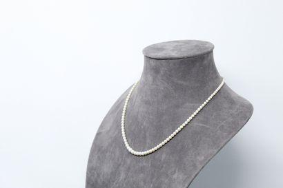 Débris de collier de perles de culture en...