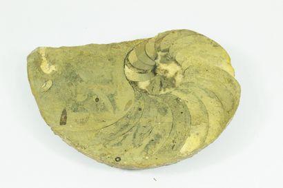 Ammonite fossilisée.  Tranche polie.  Quelques...
