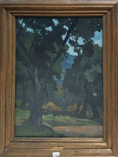 STRAUSS André (1885-1971)  Paysage aux arbres...