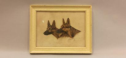 Léon DANCHIN,  Deux bergers Allemands,  Lithographie...