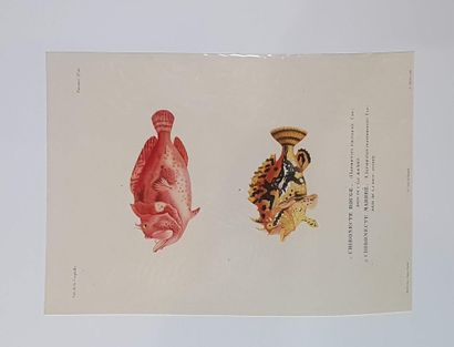 DUPERREY, Louis-Isidore (1786-1865), Voyage...