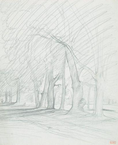 Route sous les arbres Mine de plomb (trace...