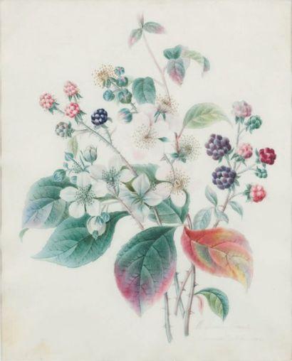 BRAZIER Marie -Caroline (1758 -1839)