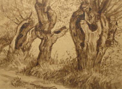 Les Ormes Lavis d'encre brune sur papier...