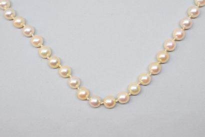 Collier de perles de culture choker, le fermoir...