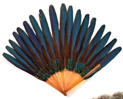 Eventail en plumes rectrices d'Ara.  Monture...