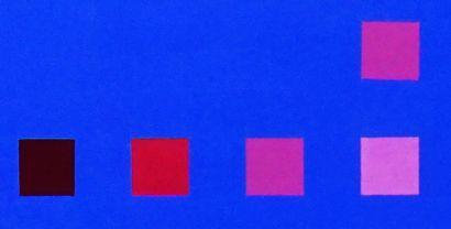 """BILL, Jakob (1942-)  """"No.13""""  Huile sur toile  Titrée, signée et datée à l'arrière:..."""