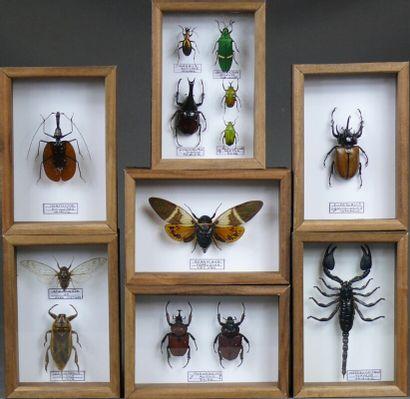 Lot de sept coffrets d'insectes exotiques...