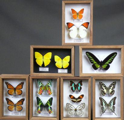Lot de sept petits coffrets de papillons...