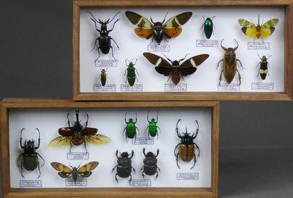 Divers insectes exotiques dont coléoptères,...