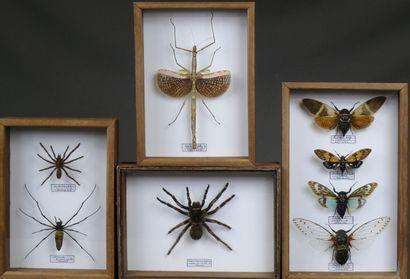 Quatre coffrets d'insectes et arachnides...