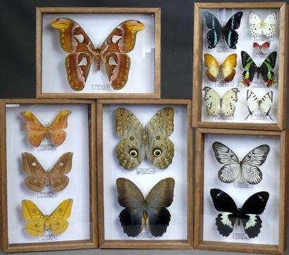 Cinq coffrets de spécimens exotiques spectaculaires...