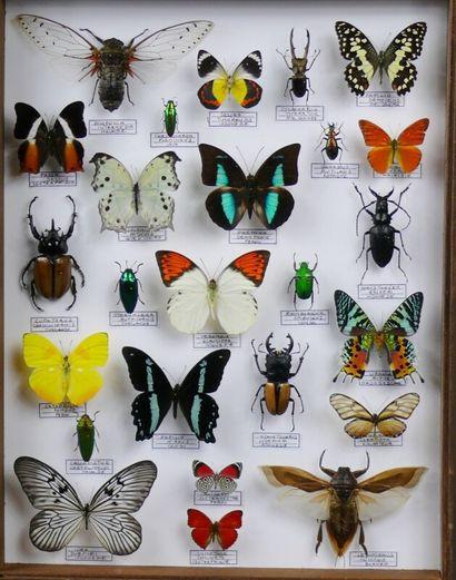 Grand encadrement décoratif de papillons...