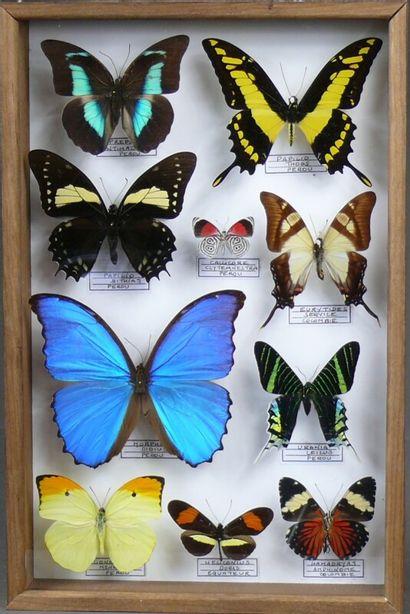 Lépidoptères d'Amérique du Sud - format 39...