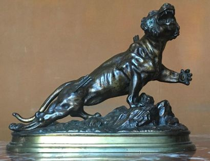 J. HESTEAU (XIX-XXe) Le Tigre blessé Bronze...