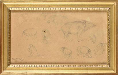 Rosa BONHEUR (1822-1899) Etude de sangliers...