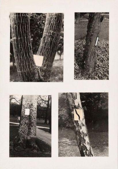 GERA URKOM (SRB/ NÉ EN 1940) Sans titre (Arbres...