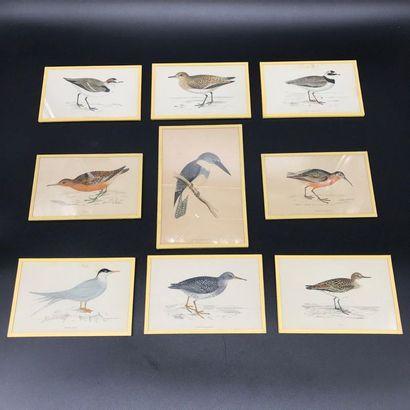 Suite de six gravures anglaises d'oiseaux...