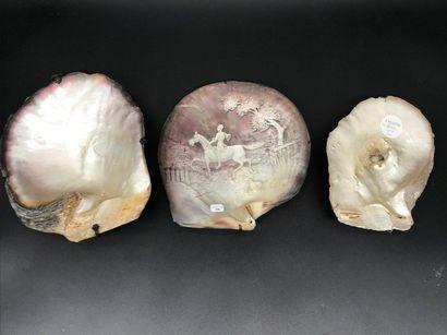 Trois COQUILLAGES nacrés dont l'un gravé...