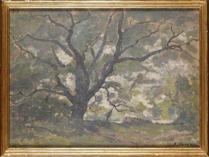 Raymond VERDUN (1873-1954) Arbre Huile sur...
