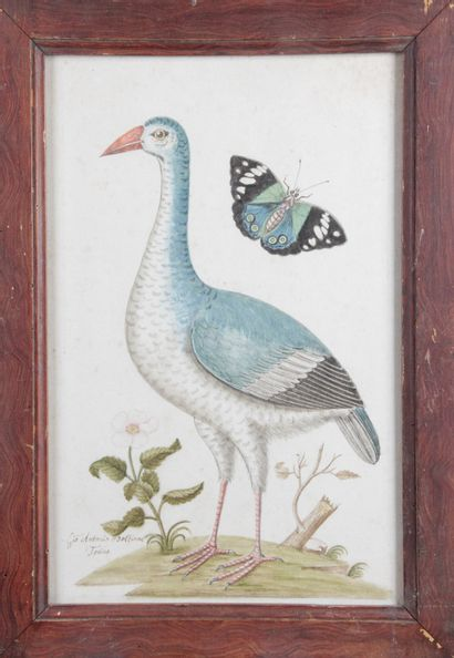 ÉCOLE DU XVIII SIÈCLE ??? « Étude ornithologique...