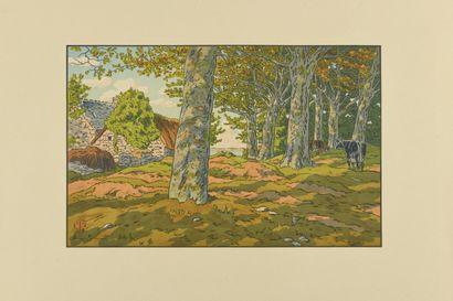HENRI RIVIERE (1864-1951) Bois de Hêtres...