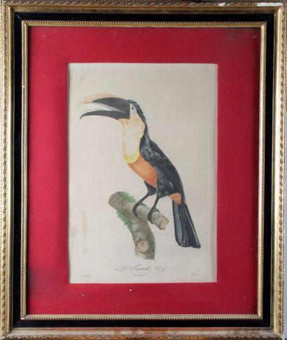Jacques BARRABAND (1768-1809) « Les oiseaux...
