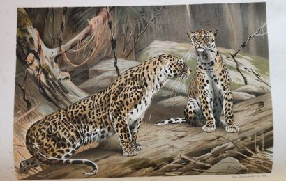 BREM A. (1829-1884)  La Vie des animaux. Edition illustrée en 3 Vols. Ed. « La Renaissance...